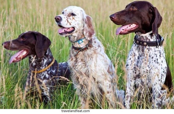 Five tips to teach your dog to hunt