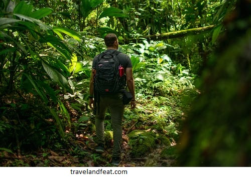 Tips to survive in the jungle