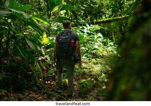 Rainforest trip: Guide for first-time visitors